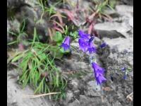 цветы на Чусовой