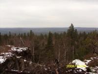 Уральская тайга