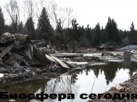 преступление против леса